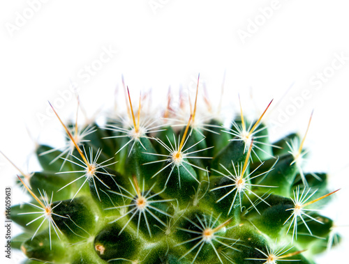 Keuken foto achterwand Cactus Mammillaria Cactus isolated on white background
