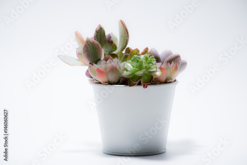 Photo  多肉植物