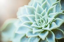 Close Up Macro Green Cactus