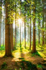 Ein Morgen im Wald mit heller Sonne