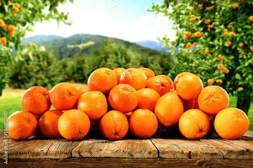 stos-swiezo-zebranych-pomaranczy-w-ogrodzie