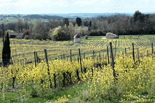 vineyard outside bergerac, france Canvas Print