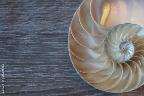 Fotografie, Obraz  nautilus shell symmetry Fibonacci half cross section spiral background copy spac