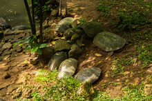 A Group Of Turtles Playing On ...