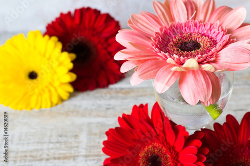 Aluminium Prints Gerbera Red and pink gerbers on a light background