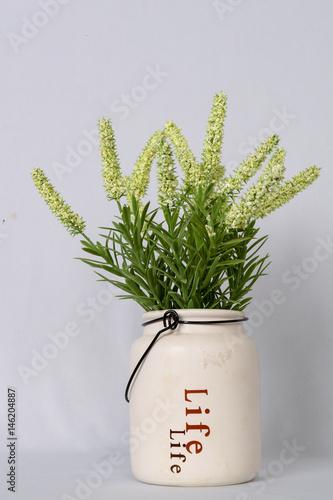 Life green plant po - 146204887