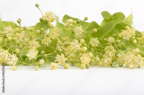 Harvest of fresh linden flowers. Studio shot of linden flowers over white background. Large