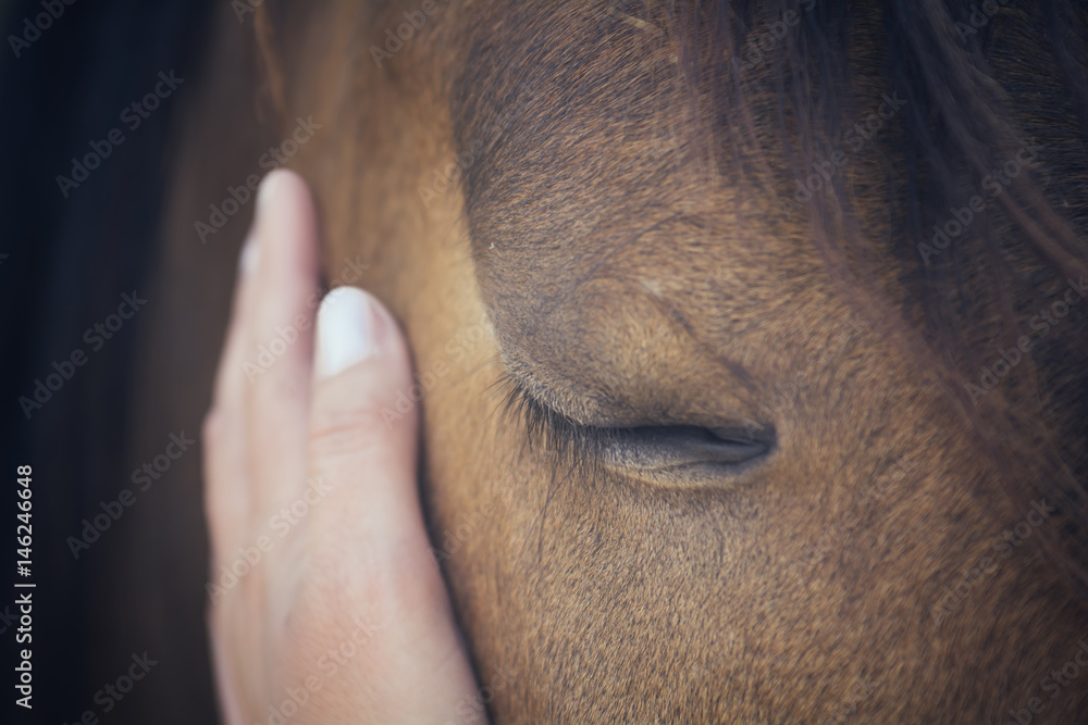 Fototapety, obrazy: A female hand stroking a brown horse head - Close up portrait of a horse - Eyes shut - Tenderness and caring for animals concept