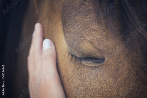 Fototapeta A female hand stroking a brown horse head - Close up portrait of a horse - Eyes shut - Tenderness and caring for animals concept obraz