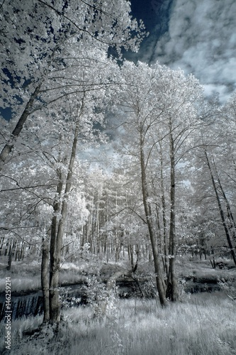 Fotomural  Landscape in infrared light