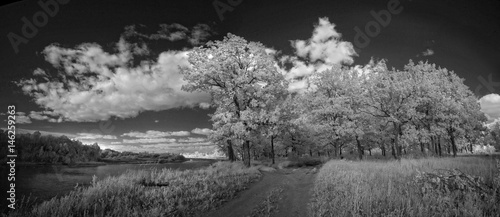 Fotografía  Landscape in infrared light