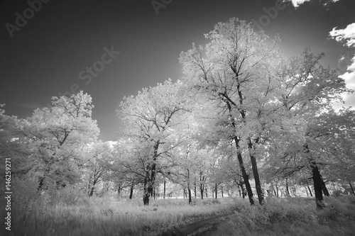 Cuadros en Lienzo  Landscape in infrared light