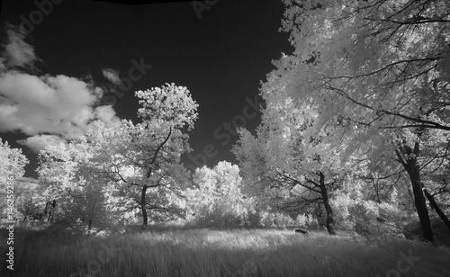 Fotografía Landscape in infrared light