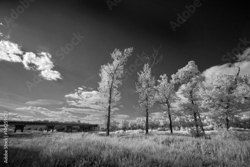 Photo  Landscape in infrared light