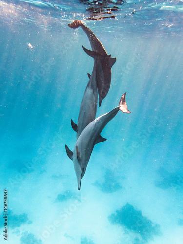 Türaufkleber Delphin Drei Spinnerdelfine Tollen im Meer