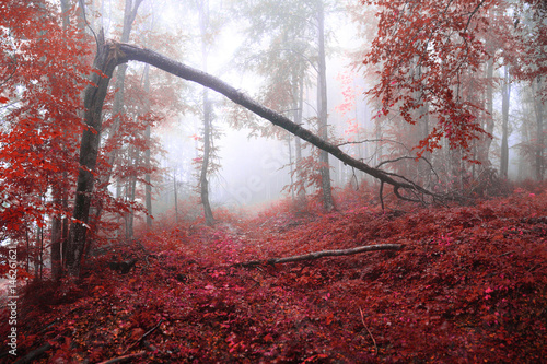 Fotobehang Bordeaux Misty autumn forest