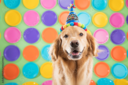 Golden Retriever Birthday Dog Buy This Stock Photo And Explore