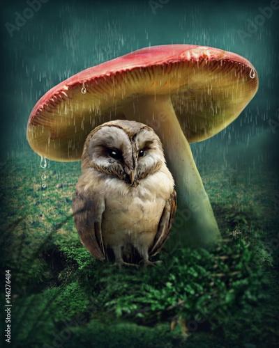 Fotobehang Uil Little owl under mushroom