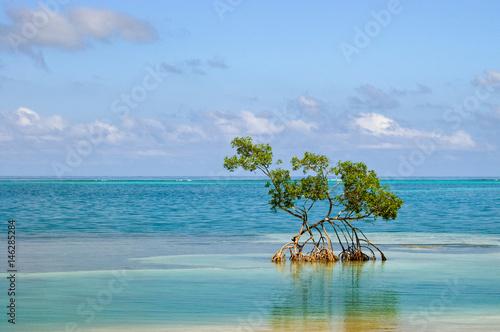 Valokuva One Mangrove
