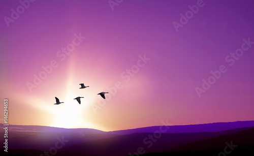 Prune Birds flying against purple landscape in the background