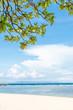 Plants and tropical beach Nusa Dua, Bali island, Indonesia.