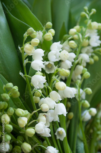 Bouquet De Muguet Porte Bonheur Buy This Stock Photo And Explore
