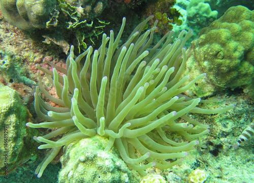 Fotografie, Obraz  vue sous marine plongee tropique