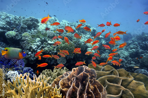 Poster Sous-marin Tropical fish and Hard coral