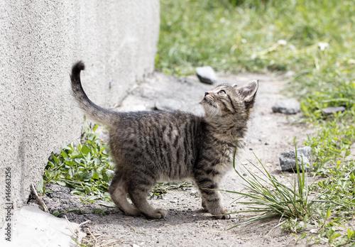 Fotografia  wild street cat