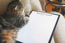 The Cat Lies On Empty Clipboard