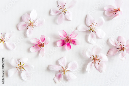 top view on white background filling with sacura flowers Canvas Print