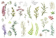 Big Set Watercolor Elements - Wildflowers, Herbs, Leaf. Collection Garden And Wild Herb, Flowers, Branches.  Illustration Isolated On White Background, Eucalyptus, Exotic, Tropical Leaf. Green.