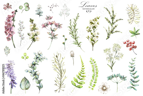 Foto Big Set watercolor elements - wildflowers, herbs, leaf