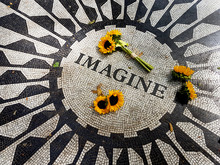 Sunflowers At Central Park Imagine Mosaic - New York, USA