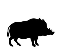 Silhouette Of A Standing Boar