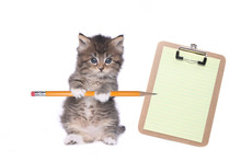 Cute Kitten Holding Pencil With Blank Clipboard