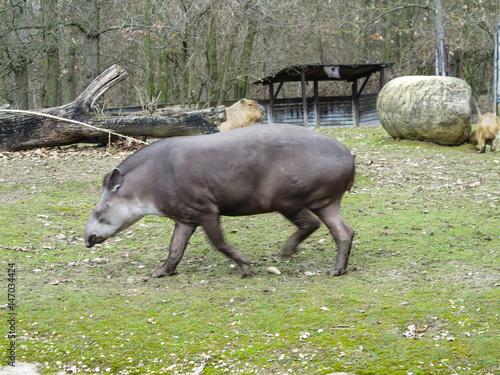 Photo Stands Ass Zoologischer Garten in Brünn, Tschechien