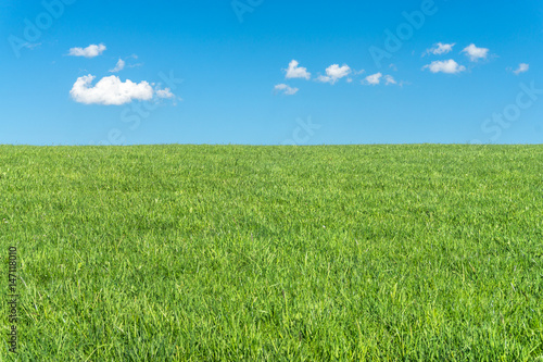 Foto auf Gartenposter Gras Green grass field with clear blue sky and white clouds
