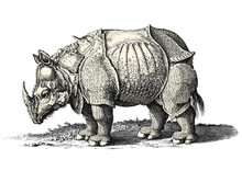 Vintage Animal Vector Design Element: Detailed Drawing Of A Rhinoceros Isolated On A White Background - Ground/grass Is A Separate Element