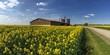 canvas print picture - Landwirtschaft in Sachsen