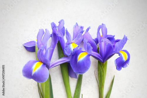 Foto op Canvas Iris Three iris on a light background