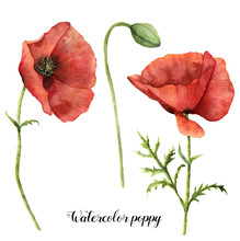Watercolor Poppies Set. Hand P...