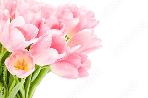 Fototapeta  Pink tulips isolated over white background