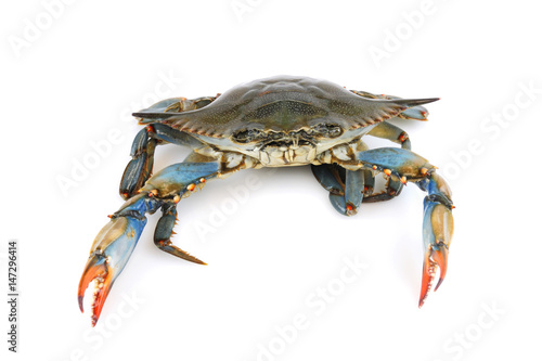 live blue crab isolated on white background Wallpaper Mural
