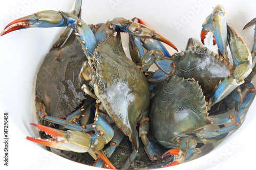 live blue crabs inside white plastic container - Buy this