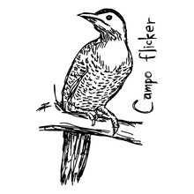 Campo Flicker - Vector Illustration Sketch Hand Drawn With Black Lines, Isolated On White Background