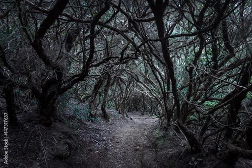 Fotografía Forêt de lauriers de l'Anaga, Tenerife, Canaries
