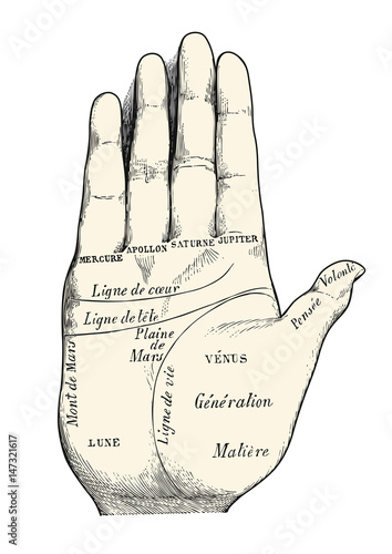Retro Vector Design Element Vintage Palm Reading Chiromancy Chart Ilration Fortune Lines Displayed On A Human Hand
