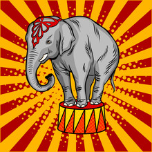 Circus Elephant On Pedestal Po...