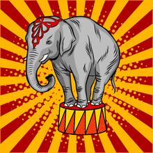 Circus Elephant On Pedestal Pop Art Style Vector